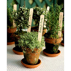 Potted herb escort cards Tips & Tricks: Fresh Herb Centerpieces